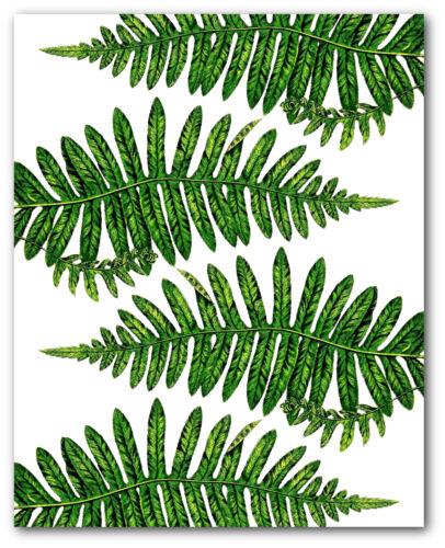 Fern Leaf Print Botanical Alpine Polypody Art Unframed 8 x 10 Inches