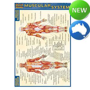 quick study nursing | eBay