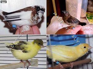 300Anellini Anelli Colorati Uccelli (Canarini,Cardellini,Diamantini, Gould)2,8mm - Italia - 300Anellini Anelli Colorati Uccelli (Canarini,Cardellini,Diamantini, Gould)2,8mm - Italia