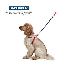 Ancol-Bungee-Amortiguador-Perro-Cachorro-Cable-Extension-Simple-Doble-Acoplador
