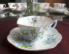 SHELLEY Fine Bone China   ** FORGET-ME-NOTS** #2394  Stratford Shape