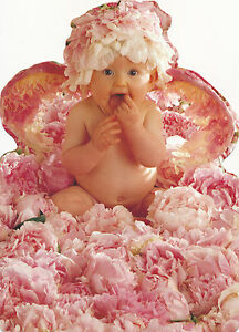 AG32-1 CARTE COLLECTION ANNE GEDDES Briefkaarten