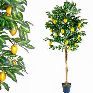 ALBERO-limoni-TRONCO-vero-legno-piante-artificiali-Albero-finto-184-cm