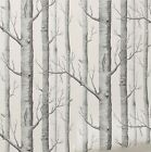 10M Forest Birch Tree Rustic Modern Minimalist Black White Woods Wallpaper Roll