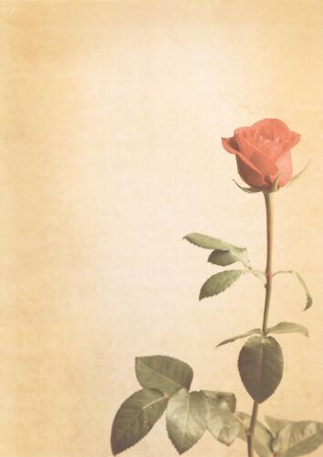100 Blatt Motivpapier-5018 Rose rot Blumen Sommer Briefpapier TOP DIN A4