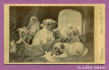 CDV LOVEJOY À NEW-YORK : ANIMAUX,  LES 4 JEUNES CHIENS & COUFFIN EN OSIER - B31