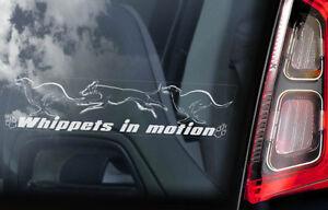 Whippets-in-Movimento-Auto-Finestrino-Adesivo-Inglese-Rescue-Cane-V04