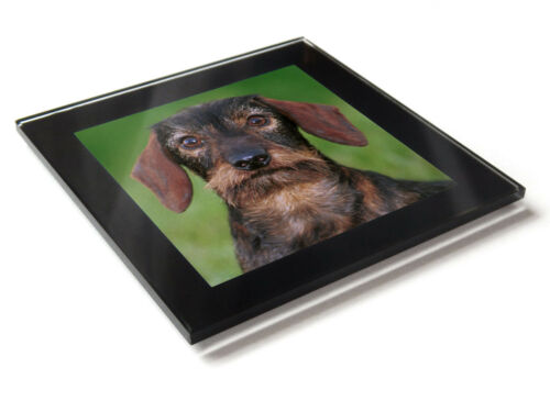 DACHSHUND WIREHAIRED Dog Puppy Premium Glass Table Coaster with Gift Box