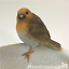 Robin-Bird-Bath-feeder-aged-stone-effect-bowl-ideal-garden-bird-robin-lover-gift miniatuur 3
