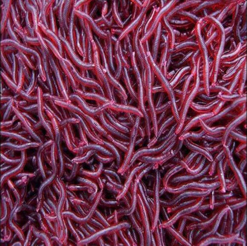 100 Pcs Soft Red Earthworm Fishing Bait Lures Worm Crankbaits Hooks Baits Tackle