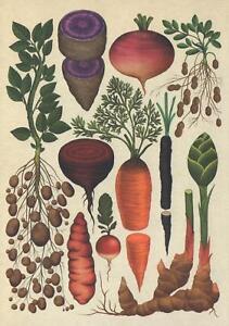 LARGE-SIZE-VEGETABLES-POTATO-CARROT-PEANUT-GINGER-POSTCARD-Kew-Royal-Botanic
