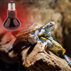 Sur E27 Reptile Reptile Terrarium Lampe Infrarouge Détails