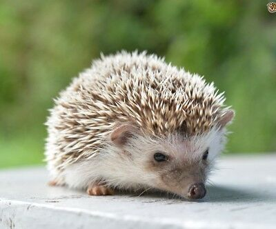 HedgehogHollow