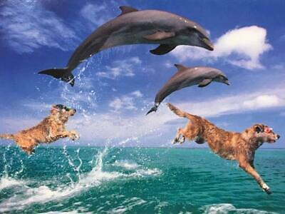 """/""""Here/'s to Another Year of Adventures/"""" FUNNY ANNIVERSARY CARD Avanti Dog Dolphin"""