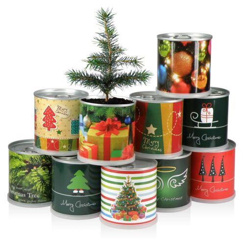 ALBERO DI NATALE IN SCATOLA-Merry Christmas Verde di Macflowers