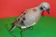 bird geocache container Rite in the Rain log dove pigeon geocaching cache