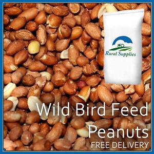 Bird Whole Peanuts - Quality Fresh Feed for Wild Birds Garden