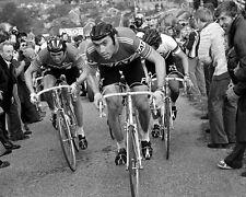 Roger De Vlaeminck Eddy Merckx Freddy Maertens 1977 Tour of Flanders 10x8 Photo
