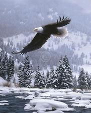 EAGLE ART PRINT - Free Flight (detail) by Daniel Smith 20x16 Wildlife Poster