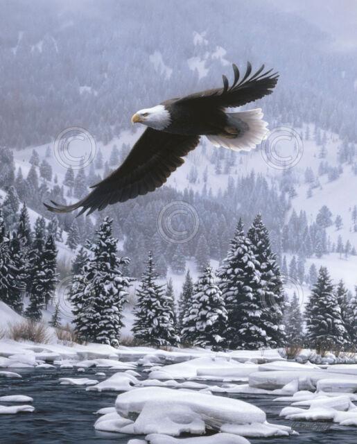 Free Flight (detail) by Daniel Smith Art Print Eagle Wildlife Poster 11x14