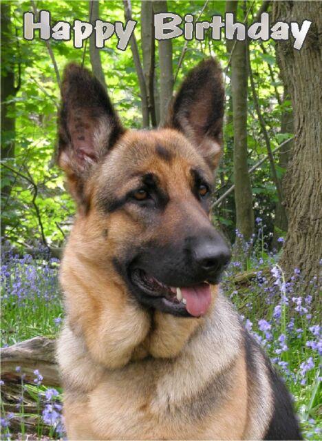 Alsatian German Shepherd Dog A6 Textured Birthday Card BDGSD 6 Paws2print