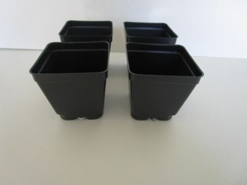 Set of 3 Divided Trays and 54-3.5 inch SQUARE DEEP NURSERY POTS Landmark