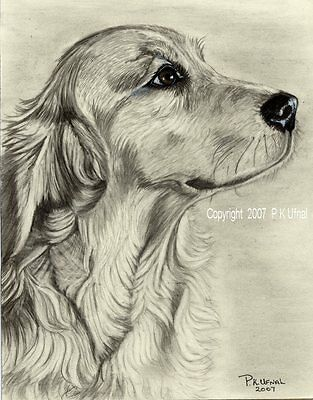Dog Art,Pencil/&Ink,Cocker Spaniel print by P K Ufnal