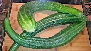 approx. 40 pickling cucumber seeds POLAN H superior cucumbers for canning 1g