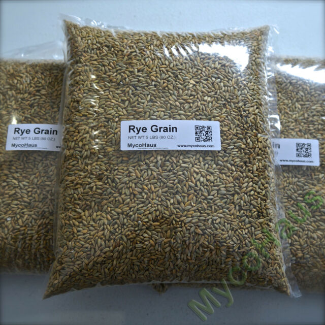 5 pounds rye berries whole grain grass seed bread baking flour beer making crop
