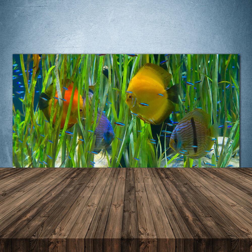 Crédence de cuisine en verre Panneau 140x70 Nature Poissons