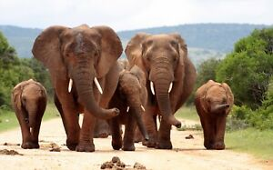 HERD-OF-ELEPHANTS-FAMILY-WILD-ANIMALS-LANDSCAPE-WALL-ART-CANVAS-PICTURE-PRINTS