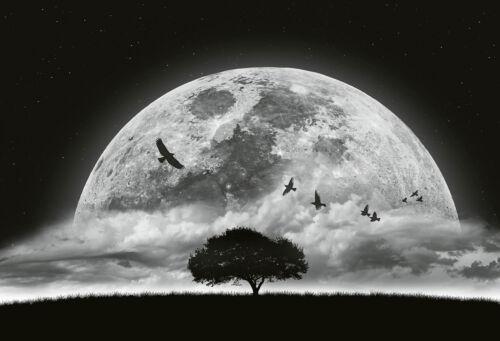 Foto-Tapete 8-teilig Größe 372x254 cm Moon and Birds