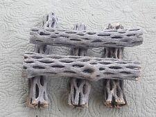 "5 Pieces 6 to 7""  Cholla Wood Cactus Untreated Fish Reptiles Crabs Birds Crafts"