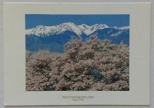 Chinese-milk-vetch-Hotaka-Town-Postcard-P326
