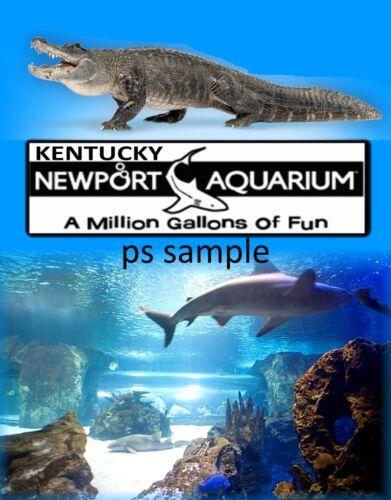 Kentucky NEWPORT AQUARIUM Travel Souvenir Flexible Fridge Magnet