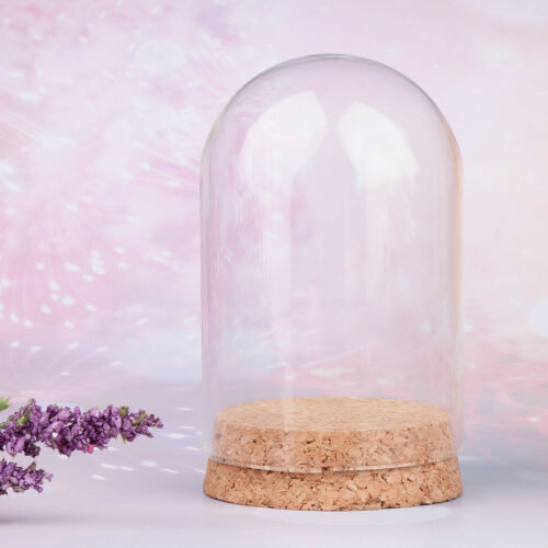 10x Mini Clear Glass Dome Cloche Bell Jar Tabletop w// Wood Base Dome