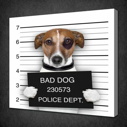 BAD DOG JACK RUSSELL CANVAS PICTURE PRINT WALL ART FREE FAST UK DELIVERY