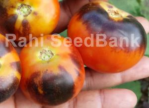 Alki Blue Blood Tomato - 10 Seeds