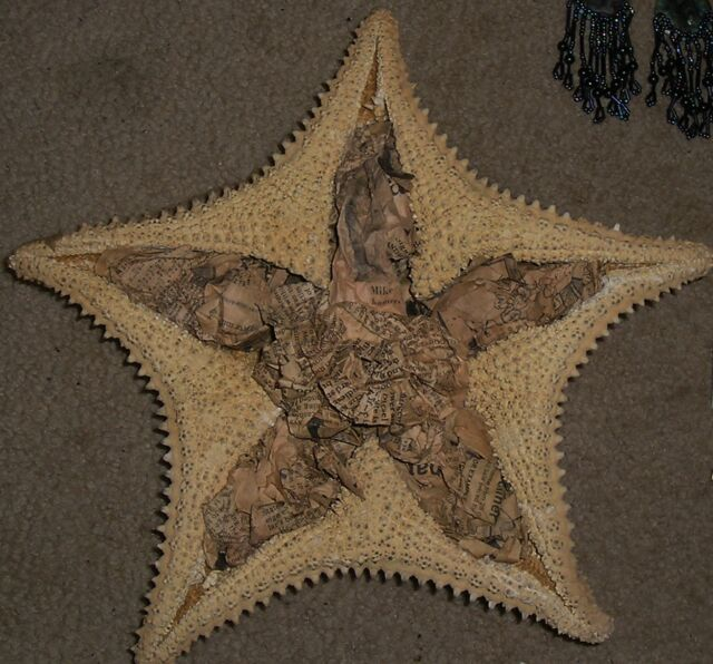 Vtg Large Sugar Starfish Real Natural 11 inches Wall Hanging Beach Decor