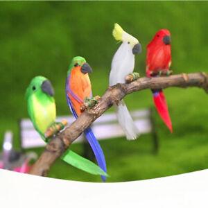 Mini-Parrot-Miniature-Casa-De-Boneca-For-1-12-Scale-DIY-Dollhouse-Accessorily-Yf