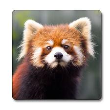 Red Panda Animal Magnet