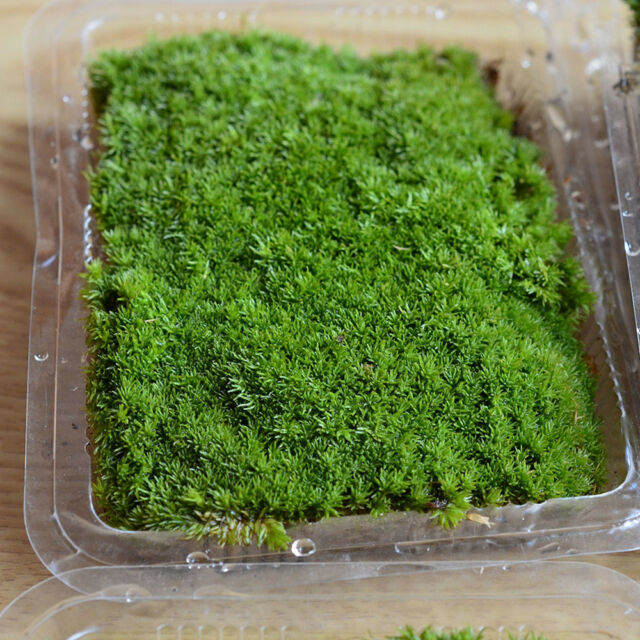 Best Mini Emulation Lawn Garden Ornament Lichen Craft Pot Fairy Dollhouse Decor.