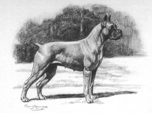 Megargee MATTED Boxer Dog Art Print