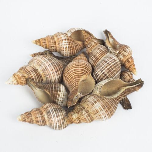 MIX ROT 10 spiralförmige Schneckenschalen//Muscheln