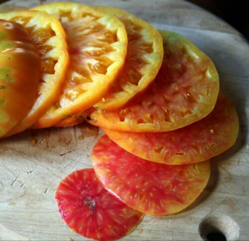 40 2021 Seeds Hillbilly Organic Heirloom Tomato Seeds