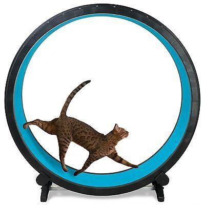 Cat Exercise Wheel - Blue