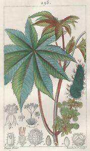 Decoration-Botanique-Ricin-Gravure-Pierre-Jean-Francois-Turpin