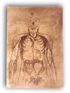 Antique-sheet-matrix-zinc-lithographs-body-human-model-anatomic-1-skull