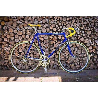 Pinarello Asolo Rennrad mit Campagnolo Schaltung
