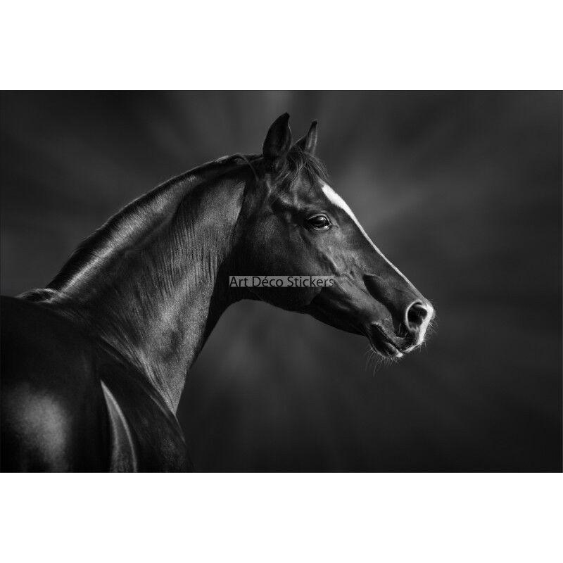 Stickers muraux géant déco : Tête de cheval cheval cheval noir 1629 | Les Produits Sont Vendu Sans Limitations  629e62